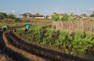 projetos para agricultura familiar.