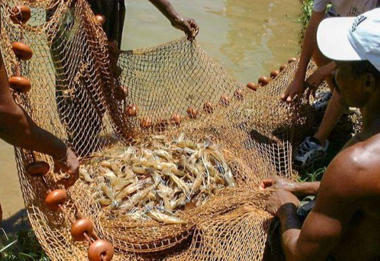 Pesca, Camarão
