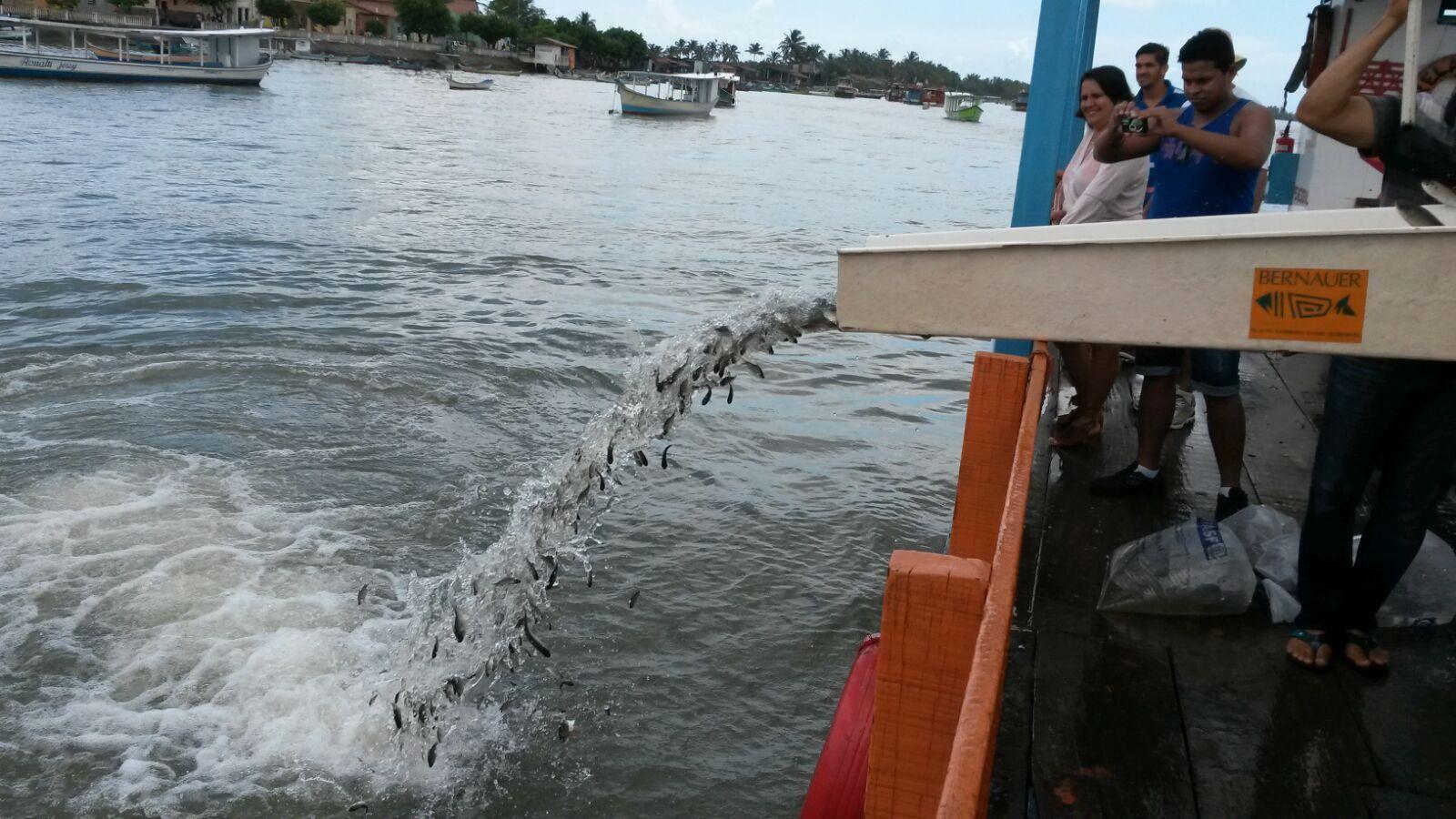 Peixamento do rio São Francisco