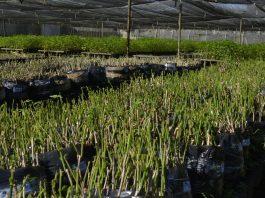 Processo Seletivo da Secretaria de Desenvolvimento Rural da Bahia